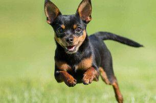 Любити по-собачому: в Херсоні мініатюрний песик завадив своєму господарю повіситися