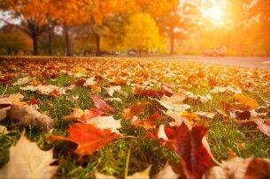 Погода на вівторок, 15 жовтня: шкода, що робочий день – бо погода знову кликатиме на природу