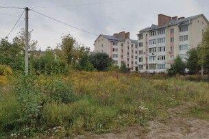 У Луцьку – карантин через амброзію: чим небезпечне її поширення
