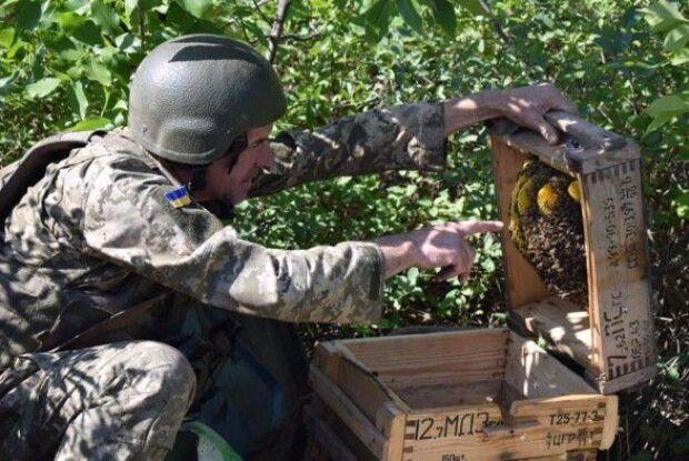 Українські бійці облаштували пасіку на передовій: на вулик пішли ящики з-під набоїв 7.62 мм (фото)