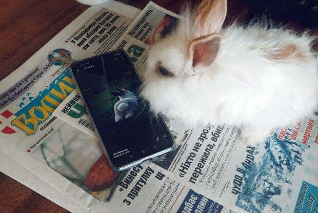 Проголосуйте за ім'я волинського кроля-мольфара, який передбачив перемогу України в 1/8 фіналу Євро-2020 (Опитування)