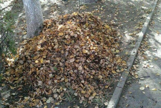 Луцькі «муніципали» відкрили новий фронт – боротьби з опалим листям