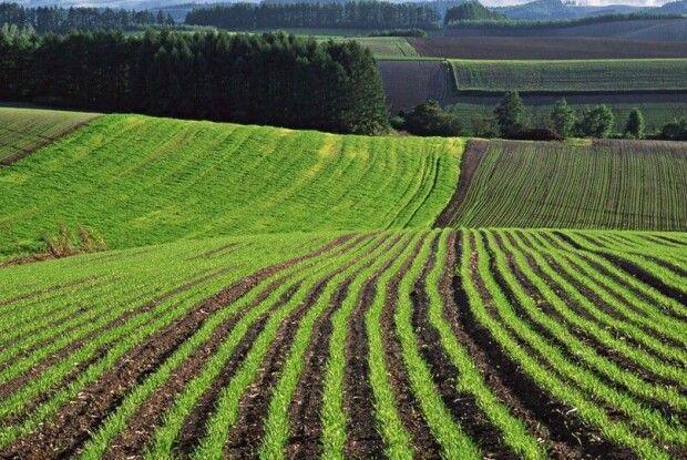 Акція протесту: земельна реформа імені Зеленського знищить 13 мільйонів дрібних і середніх сільгоспвиробників