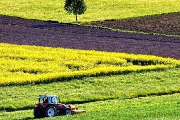 Волинь увійшла до топ областей за результатами земельних аукціонів
