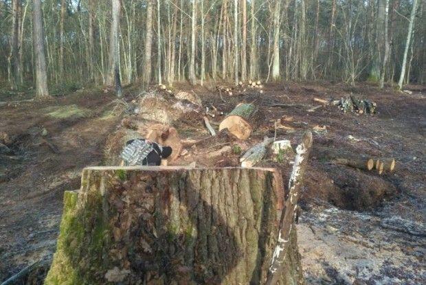 На Турійщині в заказнику «Осівський» вирубують 120-річний вільховий та дубовий ліс (Фото)