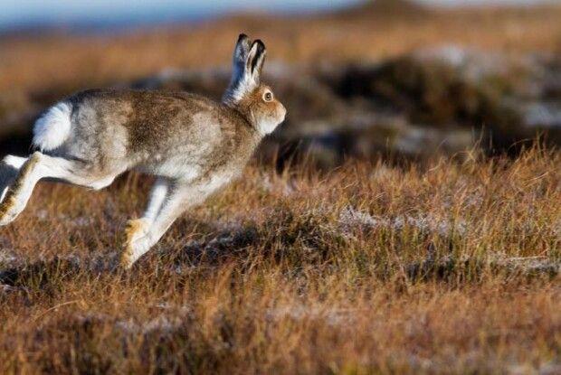На Волині покарають браконьєра, який застрелив зайця