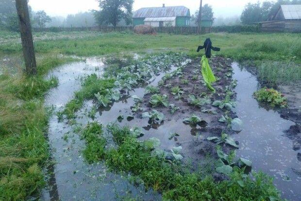 Світязь вже нелякає катастрофічним обмілінням, зате городи поліщуків перетворилися на озера...