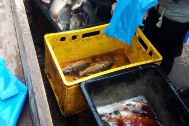 У Нововолинську злапали чоловіка, який намагався продати п'ять центнерів нелегальної риби
