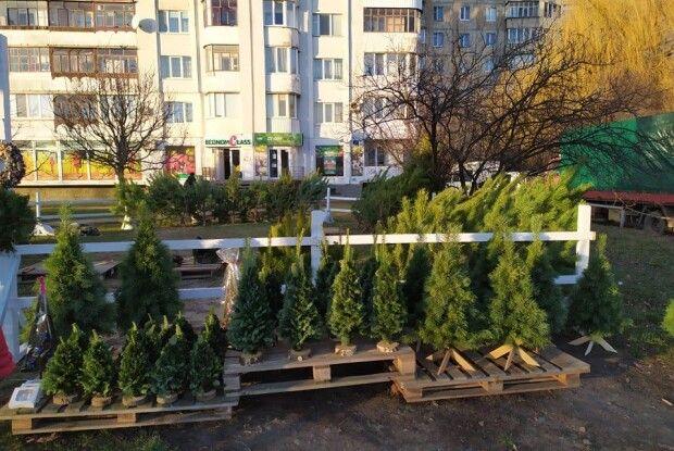 Погода на п'ятницю, 27 грудня: синоптики обіцяють трохи мокрого снігу
