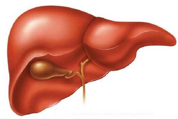 Догодите печінці— буде легше схуднути