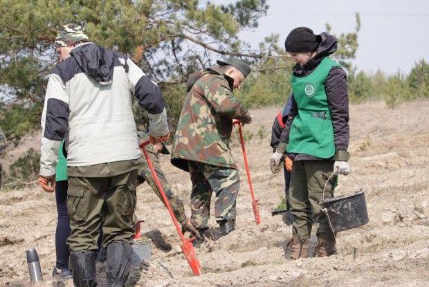 За сприяння Сашка Положинського поблизу Олики висадили 8 тисяч саджанців (Фото)