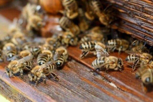 У трьох районах Рівненщини розслідують загибель бджіл