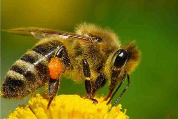 Як я купився на запевнення колеги-бджоляра