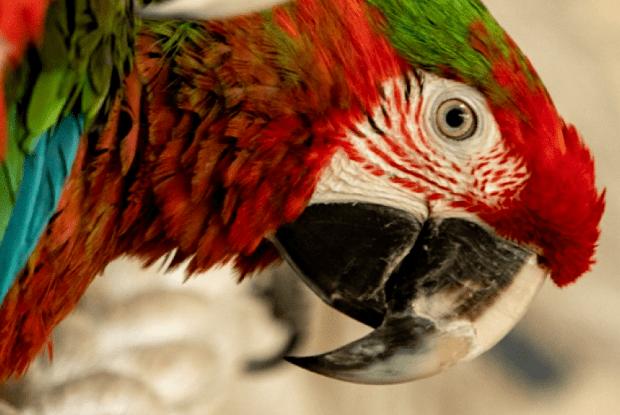 Папугу Кернеса виселили з міськради до Харківського зоопарку (Відео)