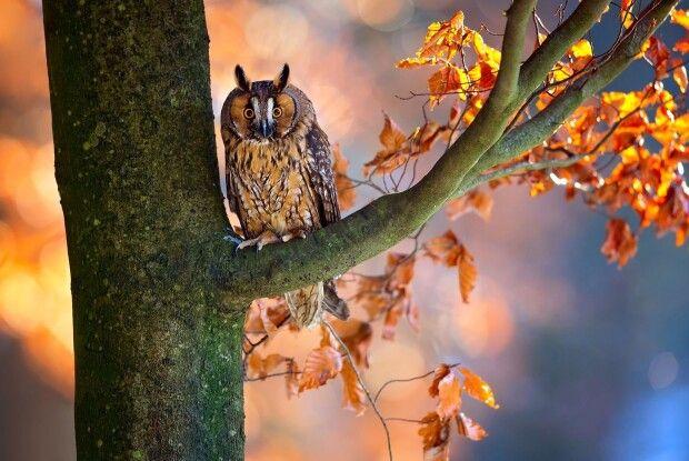 Погода на четвер, 21 листопада: осіннє тепло здає позиції...