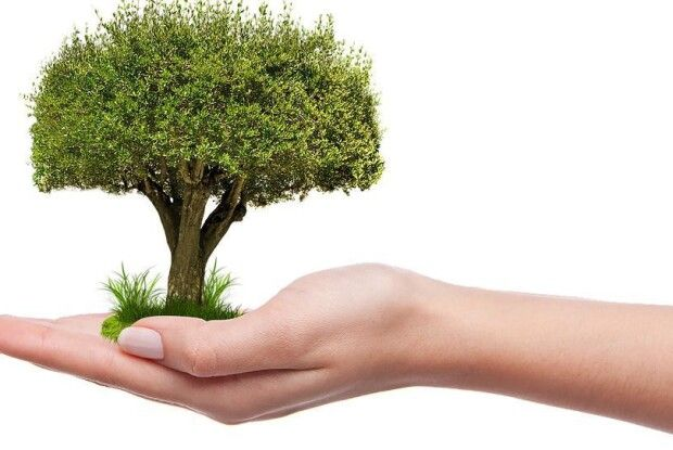 Під час телемарафону жителі Данії зібрали кошти на посадку мільйона дерев