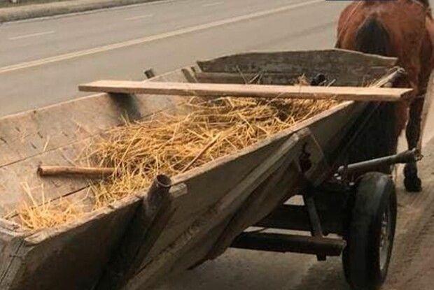 У Луцьку затримали нетверезого водія за кермом гужової підводи