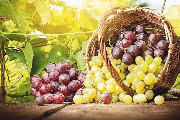 «Коли загляне осінь в сад, наллється соком виноград…»