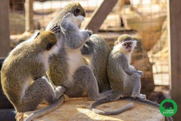 По понеділках пенсіонерам у Луцьку показуватимуть мавп, верблюдів та ведмедів безплатно