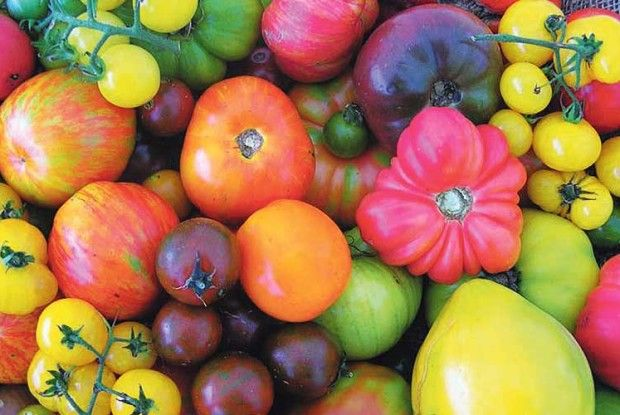 Уже й забули, скільки коштують томати вмагазинах