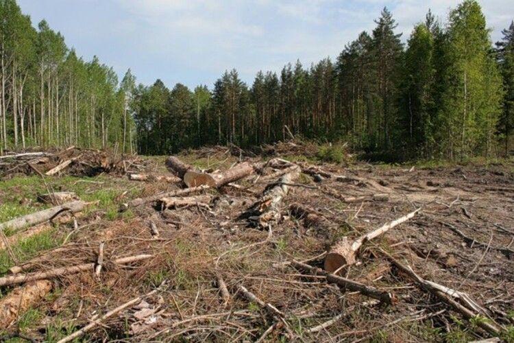 Лісгосп  на Волині завдав шкоди довкіллю на 150 тисяч гривень