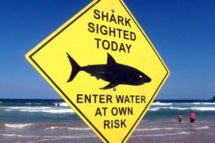 В Єгипті акула напала не лише на українських туристів: нові деталі інциденту