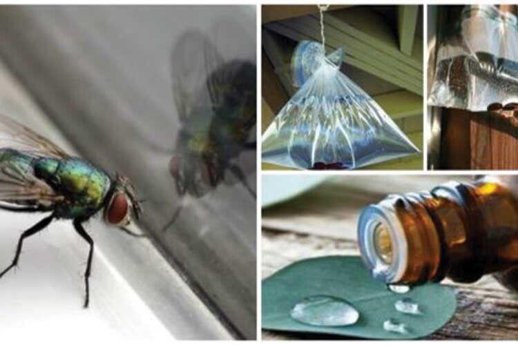 Чого бояться мухи