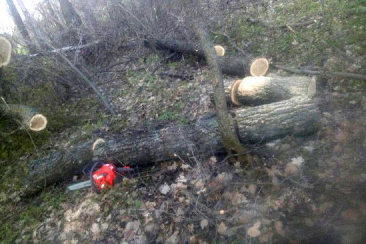 На Рівненщині двох селян «застукали» під час крадіжки дубового лісу (фото)