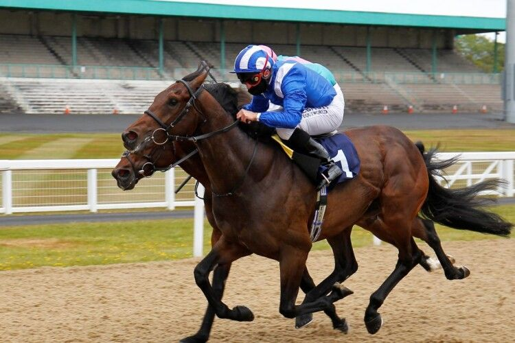 Вершника дискваліфікували на 20 років: вводив своєму коню заборонений препарат