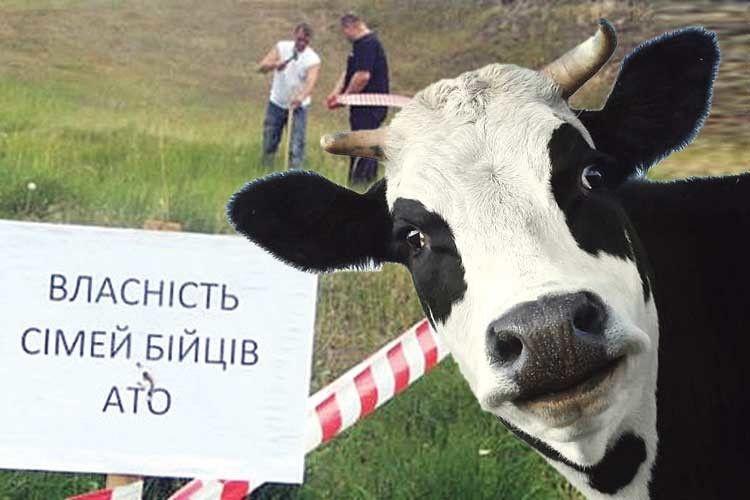 Корови проти атовців