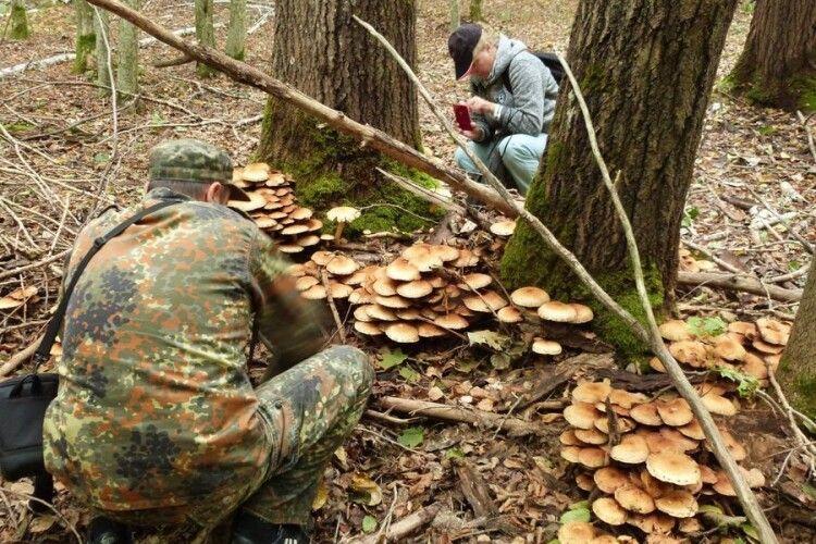 У національному парку на Волині вивчали гриби