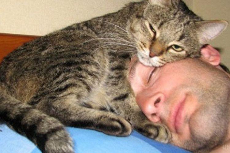 Ми на 2-му місці у світі… за любов'ю до котів