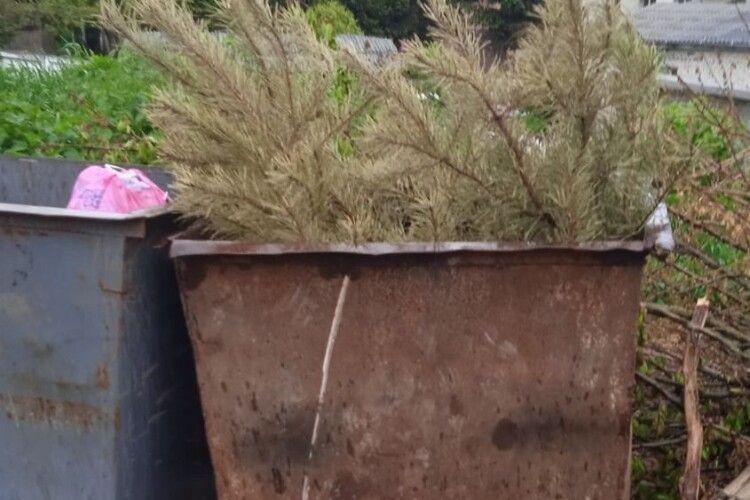 Житель Горохова нарешті викинув новорічну ялинку