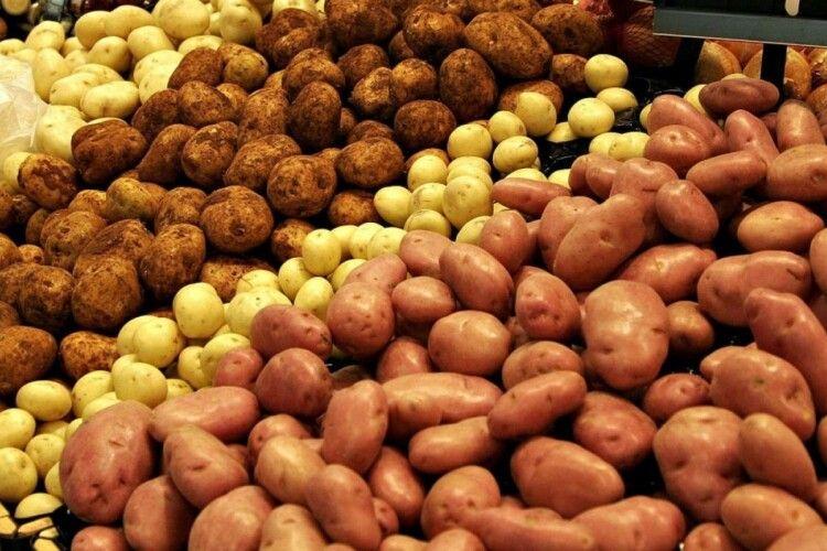 Експерти прогнозують карколомний злет цін на картоплю