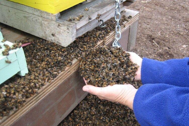 Хто винен у масовій загибелі бджіл на Поліссі?