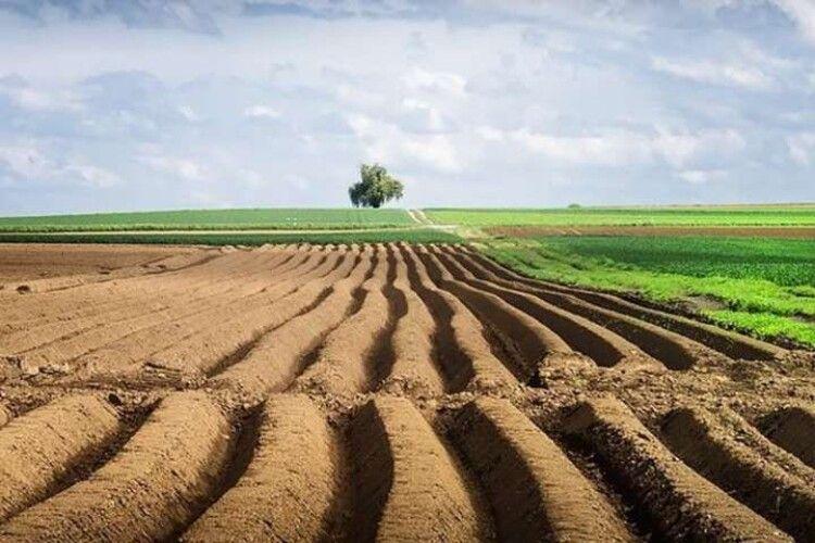 Українці можуть втратити свої паї: як встигнути оформити право власності на землю