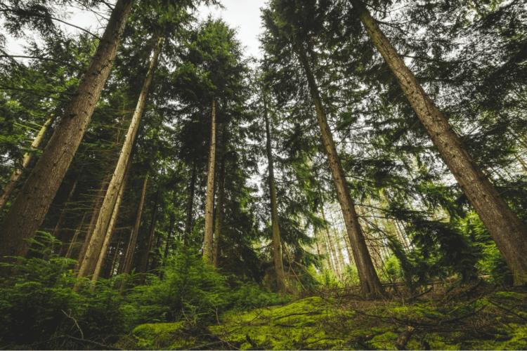На Волині державі повернули майже два гектари лісу