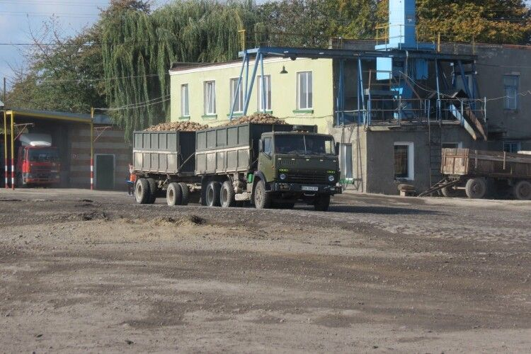 Гнідавський цукровий завод розпочинає сезон бурякопереробки: чи буде вигідно селянам