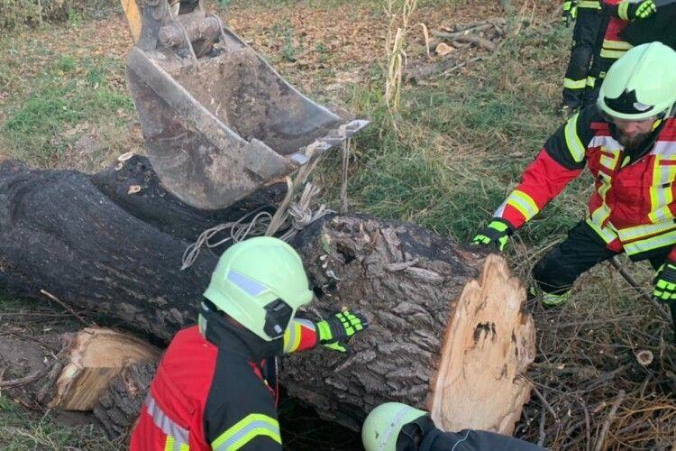Чоловіка вбило величезне дерево, яке він спилював