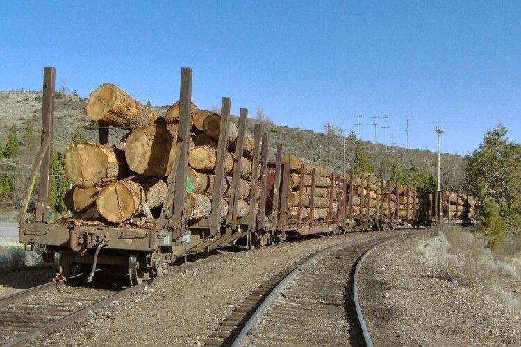 Нові правила на ринку деревини: хто встановлює та хто заробляє