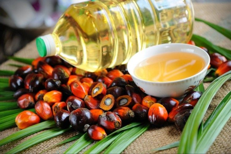 Рада проголосувала за заборону використання пальмової олії в продуктах харчування