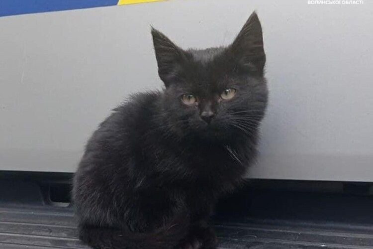 Волинські поліцейські шукають господаря для «няшного» котика, який живе на посту