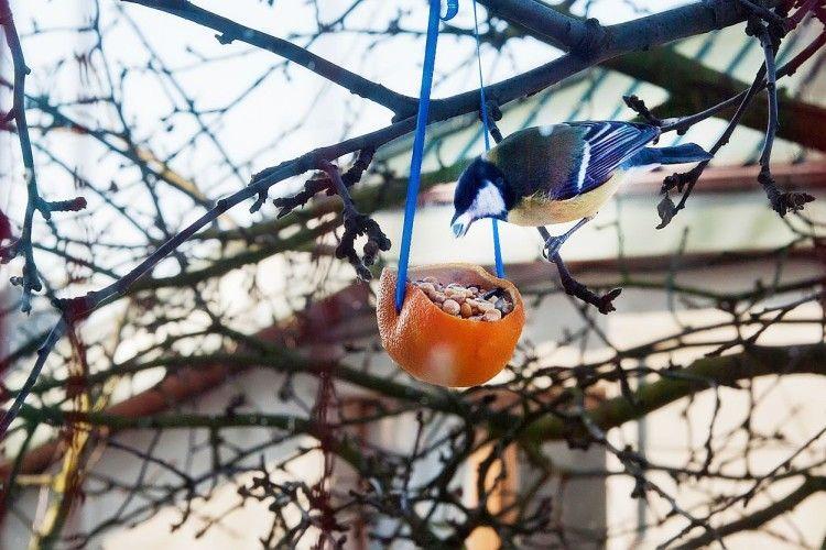 У луцькій бібліотеці вчитимуть, як самому апельсин з'їсти – та ще й синичку нагодувати
