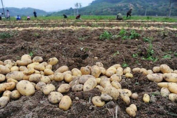 Поки батьки вибирали картоплю, їхні син та донька загинули (Фото)