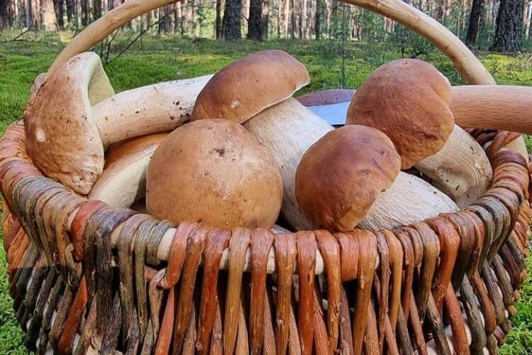 Волинянин наколупав на «Яблуньківському перевалі» 30 і ще три білих гриба, після чого заговорив словами Володимира Сосюри (Фото)