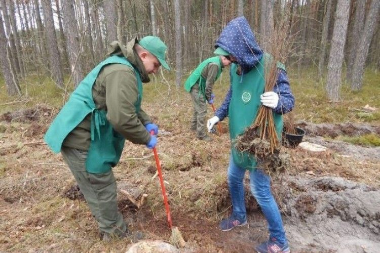 Очільники та представники громад Любомльщини створили свій ліс