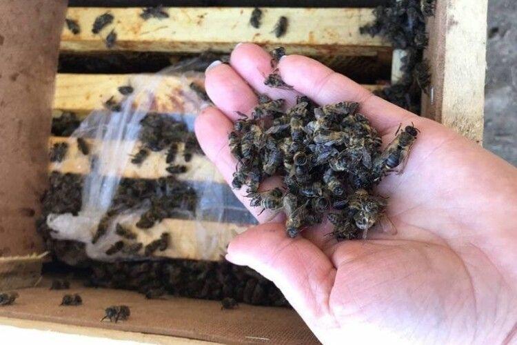 У Камінь-Каширському районі масово загинули бджоли