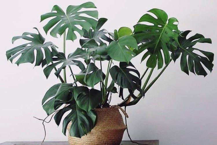 Тіньолюбні рослини для вашої оселі