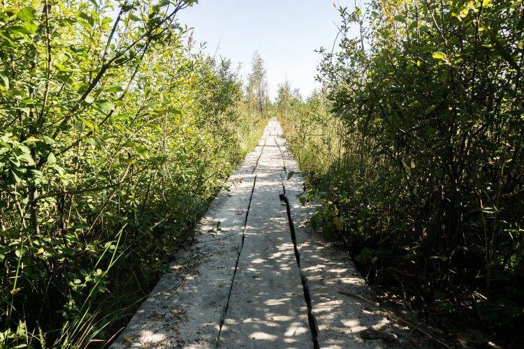 """Така """"дорога"""" тягнеться до самої середини болота"""