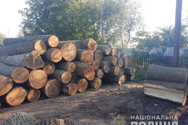 У Луцьку на підприємстві виявили півсотні колод незаконно зрубаного дуба. Деревину готували до продажу за кордон (фото)